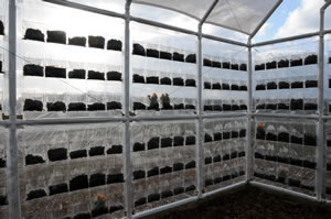 gohein Post Consumer Suffocation I: 		Greenhouse